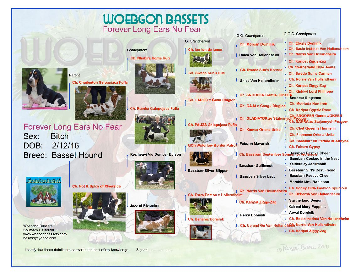 Pedigree for Forever Long Ears No Fear at Woeggon