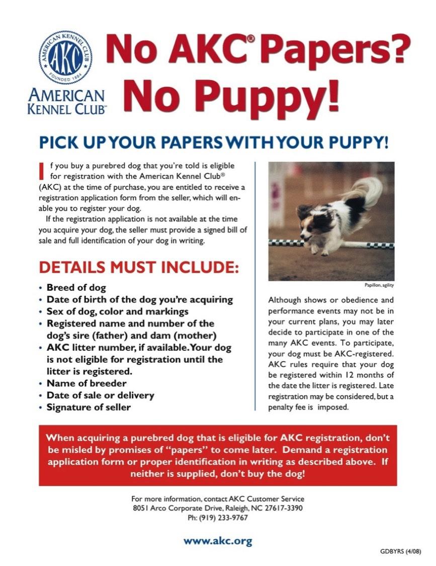AKC Basset Hound Puppies | Woebgon Bassets